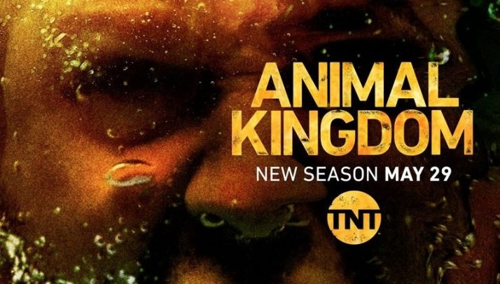 Animal Kingdom, Il punto sulla stagione 3