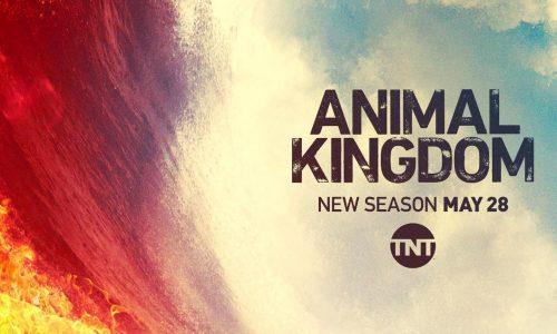 Animal Kingdom: Nuovi episodi e tante novità